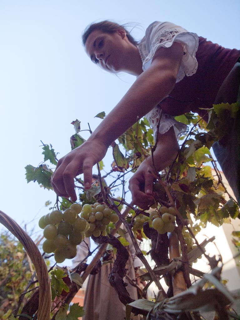 Grappoli di uva bianca (foto di iwasthere.it)