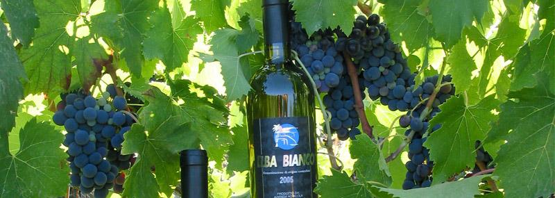 Elba Bianco (Foto www.cantinamazzarri.it)