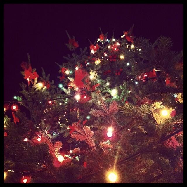 Albero di Natale (Foto Comune di Capoliveri)