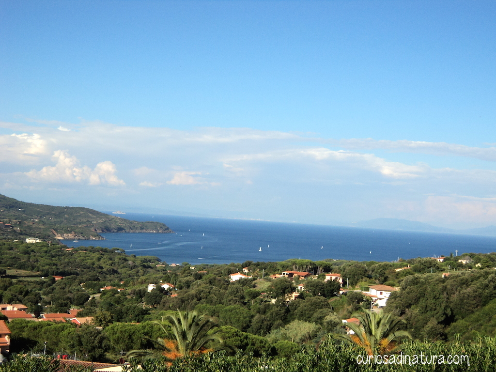 Vista da Capoliveri (Foto Sabrina Lorenzoni)